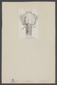 Eryon arctiformis - - Print - Iconographia Zoologica - Special Collections University of Amsterdam - UBAINV0274 006 02 0020.tif