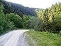 Esgair Dafydd, forest road - geograph.org.uk - 839625.jpg