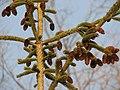 Evergreen, Mississauga (324948644).jpg