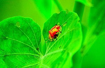 Evergreen143.jpg