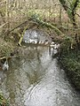 Exe Water - geograph.org.uk - 713452.jpg