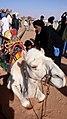 Exhibicion camellos - Saharauiak.jpg