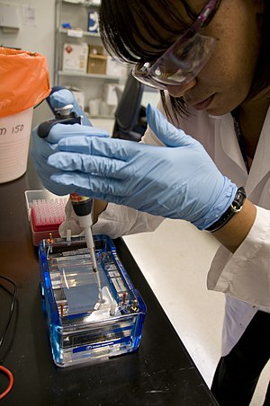 Genetic analysis - FDA microbiologist prepares DNA samples for gel electrophoresis analysis