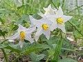FL - Flower (6298778560).jpg