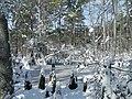 FL Swamp covered in Snow (5304109924).jpg