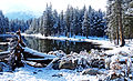 Fallen, Tioga Lake, Yosemite 5-15 (22097465313).jpg