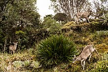 Parque Nacional Natural Chingaza Wikiwand