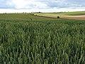 Farmland, Amesbury - geograph.org.uk - 483983.jpg