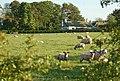 Farmland, Drumrack - geograph.org.uk - 831280.jpg