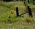 Fenced Flowers (235848155).jpg