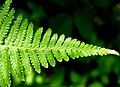 Fern - Flickr - Stiller Beobachter.jpg