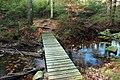Fern Rock Nature Trail (4) (16133084505).jpg