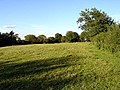 Field in the late afternoon sunshine - geograph.org.uk - 250449.jpg