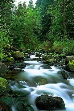 A small stream rushes over rocks through a forest.
