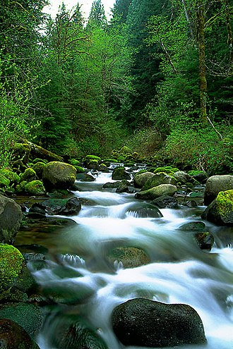 Bull Run River (Oregon) - Fir Creek, a Bull Run River tributary