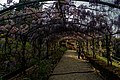 Firenze - Florence - Giardino Bardini - View West on 'Wisteria Lane'.jpg