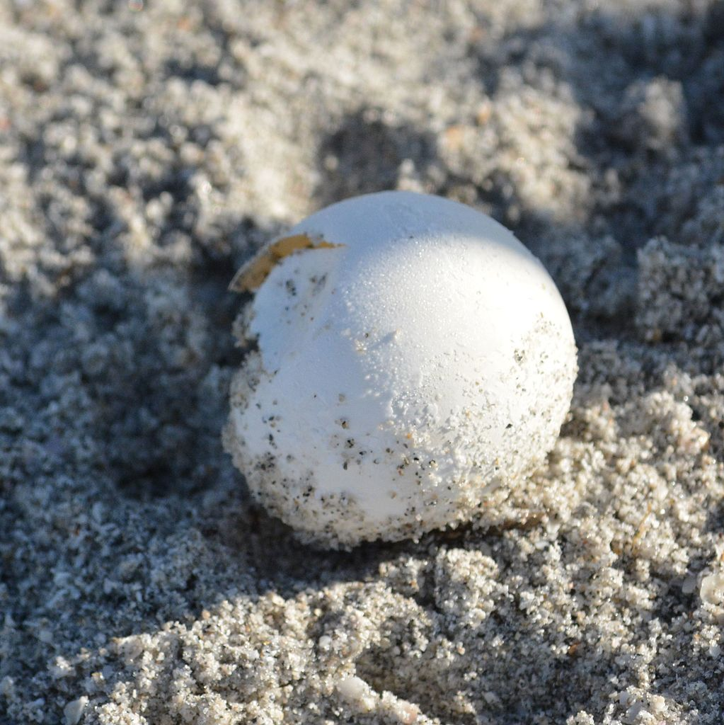 Loggerhead Sanibel Island Reviews