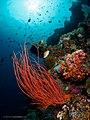 Fishscape (41701842004).jpg