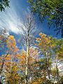 Flickr - Nicholas T - Seasonal Shift.jpg