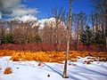 Flickr - Nicholas T - Winter Palette.jpg