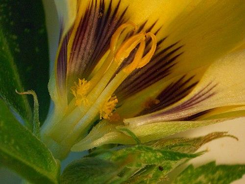 Flor em corte.jpg