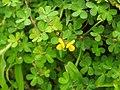 Flora from Madayipara DSCN2603.jpg