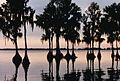 Florida cypress sunset 1984.jpeg