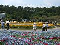 Flower-center134440.jpg