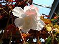 Flower-center141519.jpg