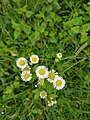 Flower20170820 100732.jpg