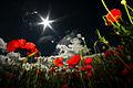 Flowers of Lesbury, Alnwick, Northumberland.jpg