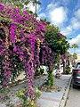 Flowers on trees.jpg