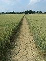 Footpath (3) - geograph.org.uk - 1384185.jpg