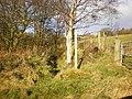 Footpath off the N side of Saltonstall Lane - geograph.org.uk - 1070219.jpg