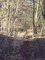 Footpath to Bavestock Long Coppice - geograph.org.uk - 329661.jpg