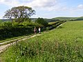 Footpath to Lower Farm, Long Bredy - geograph.org.uk - 179351.jpg
