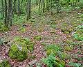 Forêt des Palanges (2).jpg