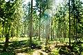 Forest Sunlight (7351990094).jpg