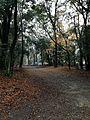 Forest in Omi Shrine.jpg