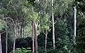 Forest near Chahala Simlipal Biosphere Reserve.jpg