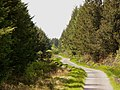 Forest road - geograph.org.uk - 448459.jpg
