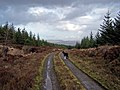 Forestry road, Greshornish Forest - geograph.org.uk - 1195932.jpg