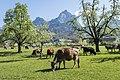 Frühling in der Zentralschweiz.jpg