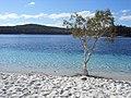 Fraser Island Lake McKenzie - panoramio.jpg