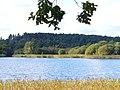 Frensham Little Pond - geograph.org.uk - 1011092.jpg