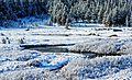 Frosty Morning, Tuolumne Meadows, Yosemite 2015 (26681394352).jpg
