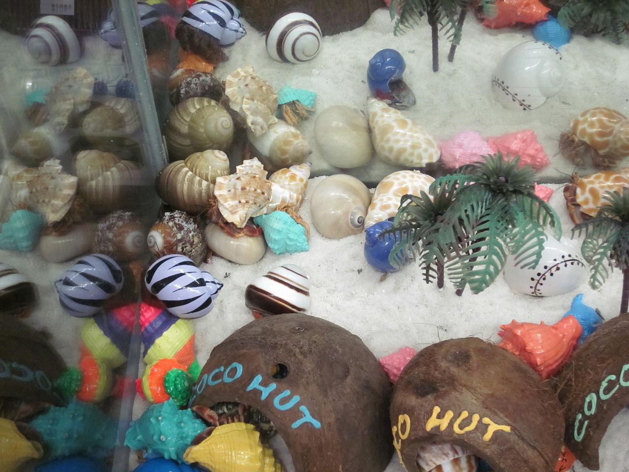 Aquarium City Pet Shop Christies Beach