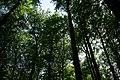 Fußweg Felsengarten Sanspareil 04082019 030.jpg