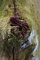 Fungi and lichen (8405320451).jpg