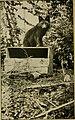 Fur-farming in Canada (1914) (14760611981).jpg